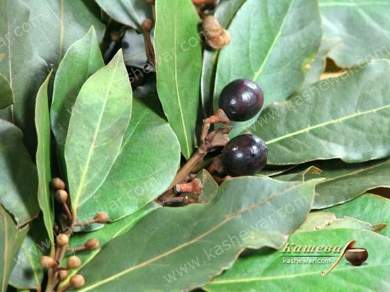 Bay leaf – recipe ingredient