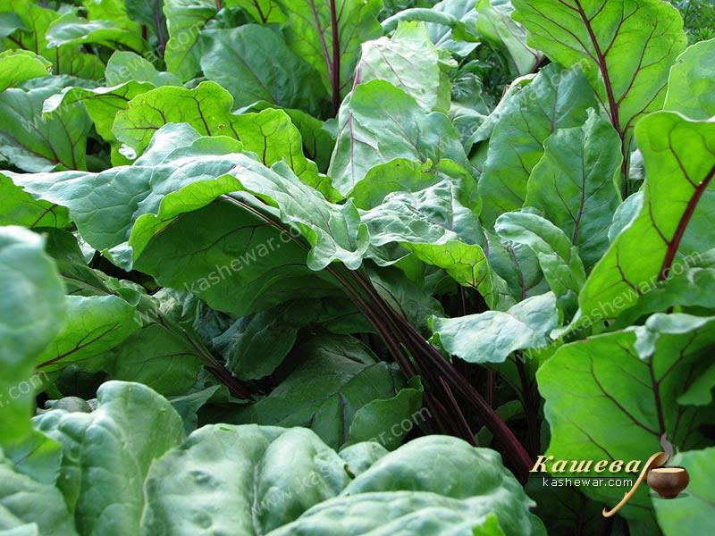 Beet leaves – recipe ingredient