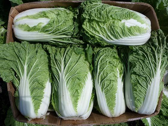 Chinese cabbage – recipe ingredient
