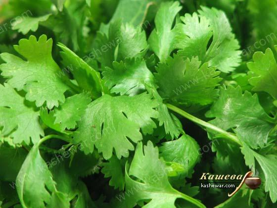 Cilantro – recipe ingredient