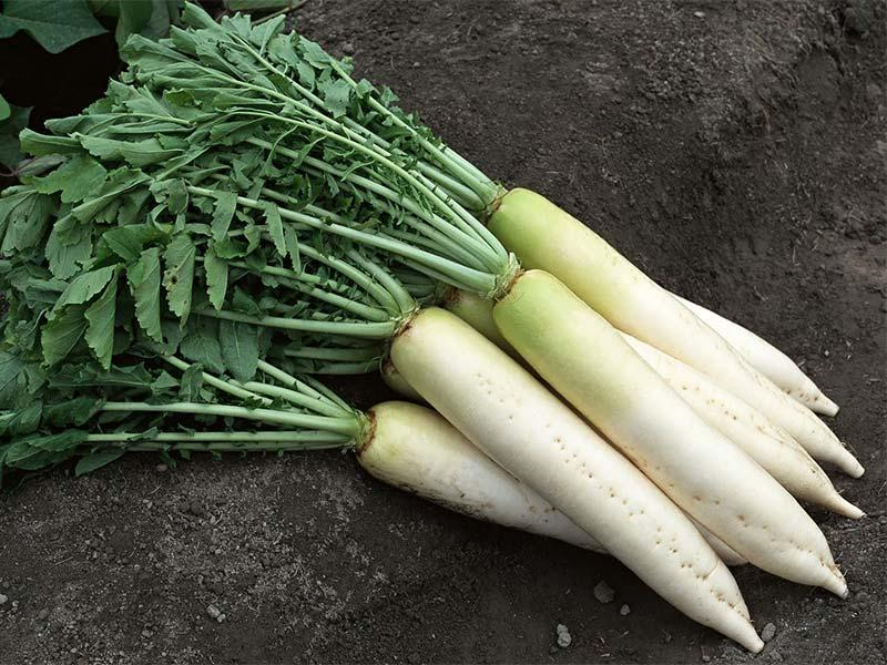 Daikon – recipe ingredient