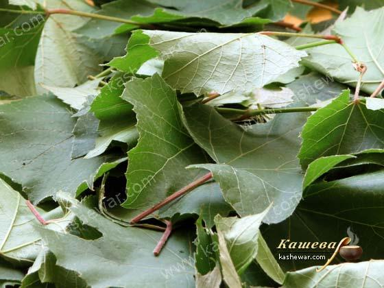 Grape leaves – recipe ingredient