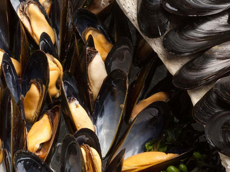 Mussels – recipe ingredient