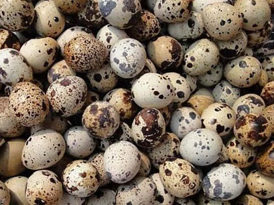 Quail eggs – recipe ingredient