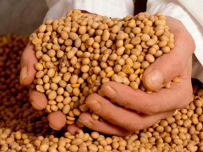 Soy – recipe ingredient